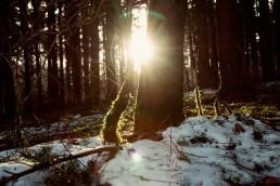 Wintersonne im Teutoburger Wald
