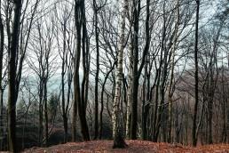 Teutoburger Wald Tecklenburg Hermannsweg