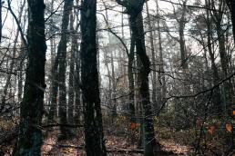 Sonne und Regen im Teutoburger Wald