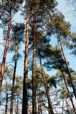 Teutoburger Wald tecklenburg Wildes Ostwestfalen