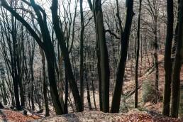Heidentempel im Teutoburger Wald - Wildes Ostwestfalen