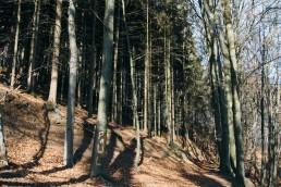 Teutoburger Wald Dörenther Klippen Paul?