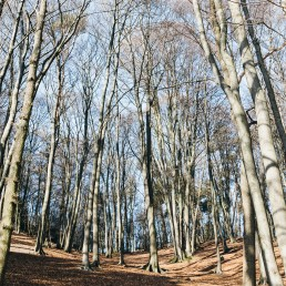 Teutoburger Wald Dörenther Klippen Buchenwald