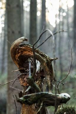 Teutoburger Wald Dörenther Klippen Märchenwald