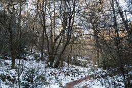 Teutoburger Wald Dörenther Klippen Winterwald