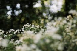 Wildes Ostwestfalen im Mai - Kirschblüten