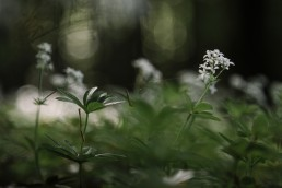 Waldmeiseterim Mai im Teutoburger Wald