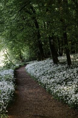 Bärlauch im Teutoburger Wald. Wildes Ostwesfalen - Nadja Jacke