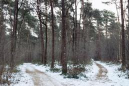 Hermannsweg Teutoburger Wald