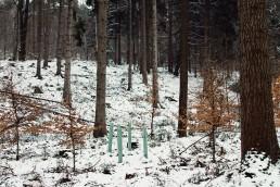 Neue Bäume im Teutoburger Wald
