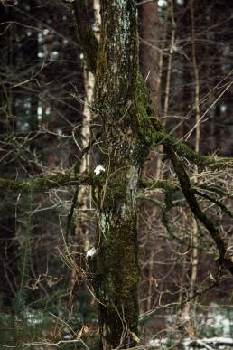 Teutoburger Wald Baumgestalt
