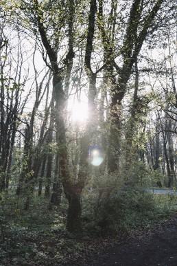 Wildes Ostwestfalen Lengerich Sonnenaufgang April 2017