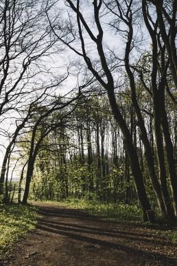 Wildes Ostwestfalen Lengerich Sonnenaufgang Teutoburger Wald April 2017