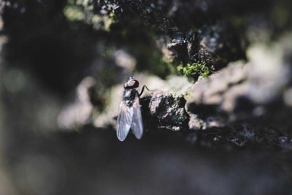 Fliege im Teutoburger Wald Wildes Ostwestfalen