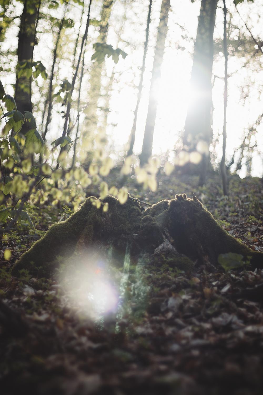 Frühling im Teutoburger Wald Wildes Ostwestfalen